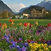 Interlaken Garden in Springtime