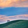Lone Tree Pastel Sunset