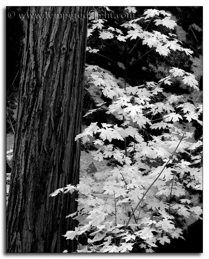 Fall Colors in Black and White